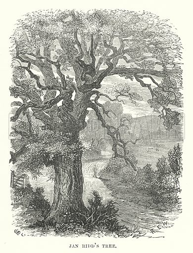Jan Ridd's Tree. Illustration for Our Own County (Cassell, c 1880).