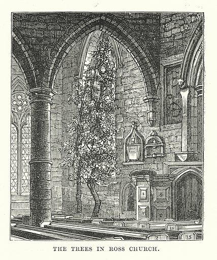 The Trees in Ross Church. Illustration for Our Own County (Cassell, c 1880).
