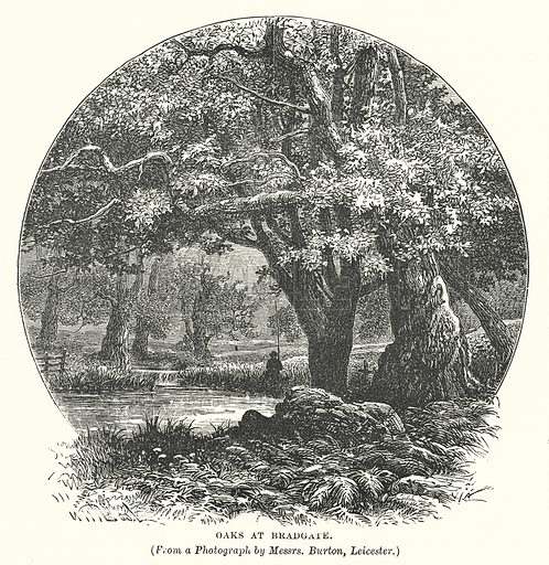 Oaks at Bradgate. Illustration for Our Own County (Cassell, c 1880).