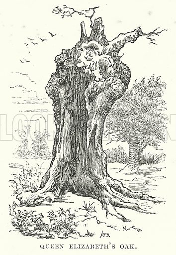 Queen Elizabeth's Oak. Illustration for Our Own County (Cassell, c 1880).