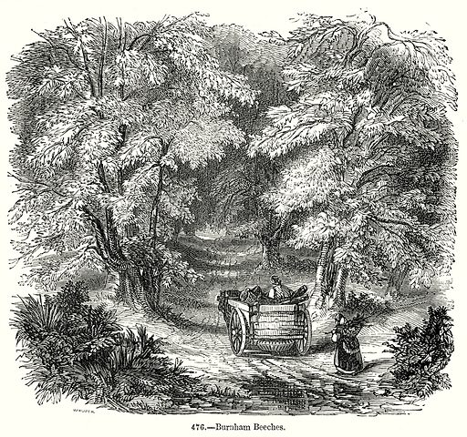 Burnham Beeches. Illustration from Old England, A Pictorial Museum edited by Charles Knight (James Sangster & Co, c 1845).