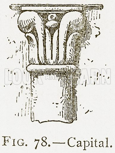 Capital. Illustration for A History of Art in Chaldaea and Assyria by Georges Perrot and Charles Chipiez (Chapman and Hall, 1884).