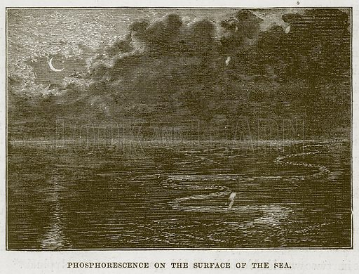 Phosphorescence on the Surface of the Sea. Illustration for The Sea by F Whymper (Cassell, c 1890).