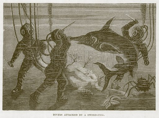 Divers Attacked by a Sword-Fish. Illustration for The Sea by F Whymper (Cassell, c 1890).