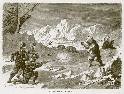 Attacked by Bears. Illustration for The Sea by F Whymper (Cassell, c 1890).