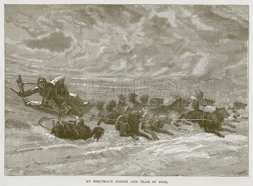 An Esquimaux Sledge and Team of Dogs. Illustration for The Sea by F Whymper (Cassell, c 1890).