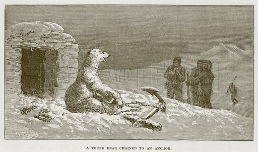 A Young Bear Chained to an Anchor. Illustration for The Sea by F Whymper (Cassell, c 1890).