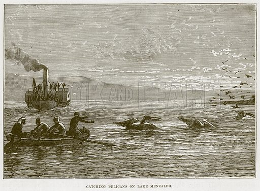 Catching Pelicans on Lake Menzaleh. Illustration for The Sea by F Whymper (Cassell, c 1890).