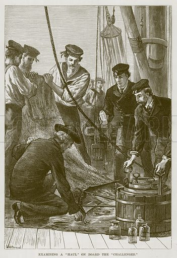 "Examining a ""Haul"" on Board the ""Challenger."" Illustration for The Sea by F Whymper (Cassell, c 1890)."