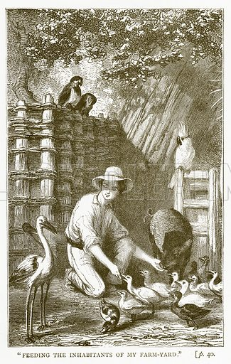 """Feeding the Inhabitants of My Farm-Yard."" Illustration for Australian Adventures by William Kingston (George Routledge, c 1890)."