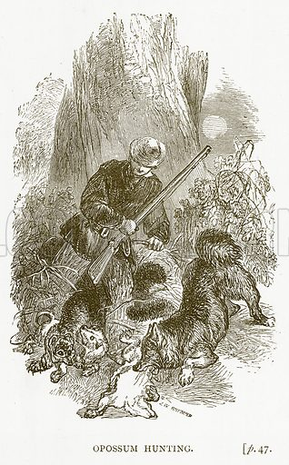 Opossum Hunting. Illustration for Australian Adventures by William Kingston (George Routledge, c 1890).