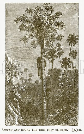 """Round and Round the Tree they Climbed."" Illustration for Australian Adventures by William Kingston (George Routledge, c 1890)."