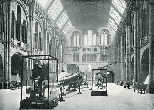 Natural History Museum, the Entrance Hall. Photograph from Round London (George Newnes, 1896).