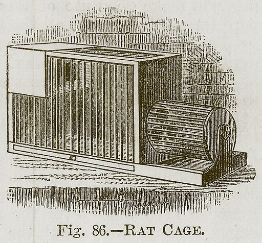 Rat Cage. Illustration for Cassell's Book of Sports and Pastimes (Cassell, c 1890).