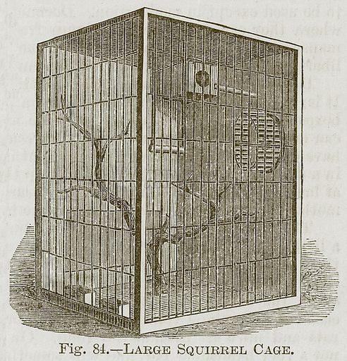 Large Squirrel Cage. Illustration for Cassell's Book of Sports and Pastimes (Cassell, c 1890).