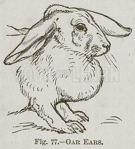 Oar Ears. Illustration for Cassell's Book of Sports and Pastimes (Cassell, c 1890).