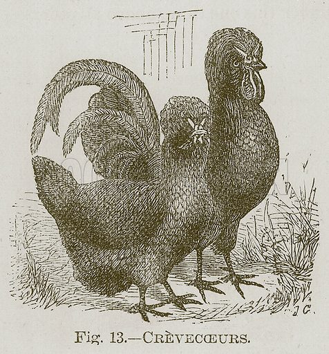 Crevecoeurs. Illustration for Cassell's Book of Sports and Pastimes (Cassell, c 1890).