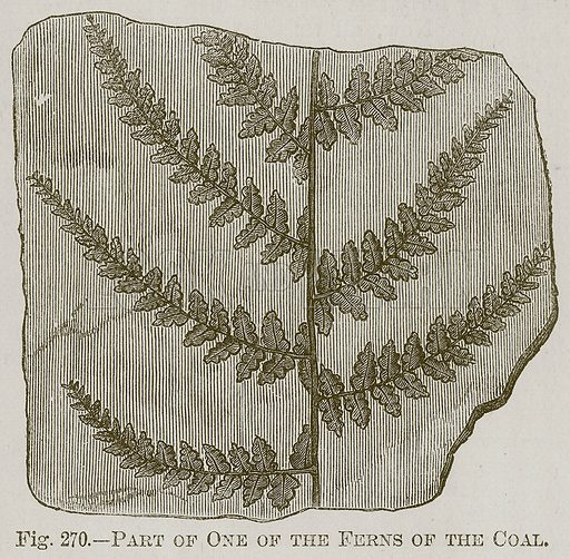 Part of One of the Ferns of the Coal. Illustration for Cassell's Book of Sports and Pastimes (Cassell, c 1890).