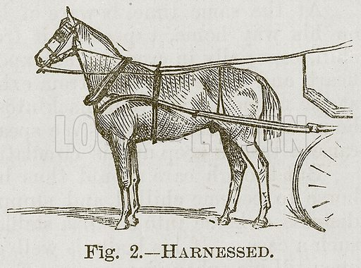 Harnessed. Illustration for Cassell's Book of Sports and Pastimes (Cassell, c 1890).