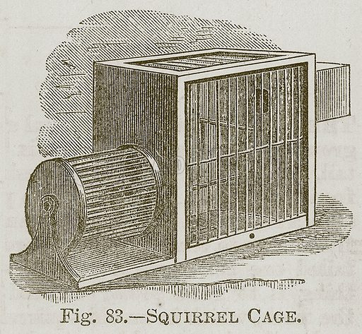 Squirrel Cage. Illustration for Cassell's Book of Sports and Pastimes (Cassell, c 1890).