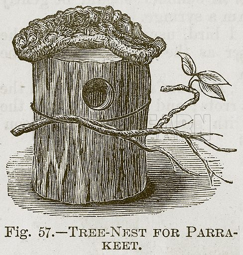 Tree-Nest for Parrakeet. Illustration for Cassell's Book of Sports and Pastimes (Cassell, c 1890).