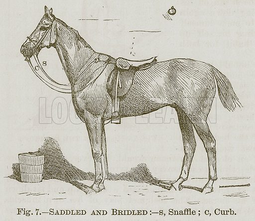 Saddled and Bridled:--s, Snaffle; c, Curb. Illustration for Cassell's Book of Sports and Pastimes (Cassell, c 1890).