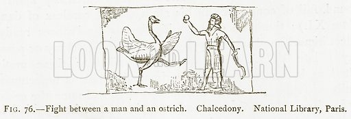 Fight between a Man and an Ostrich. Chalcedony. National Library, Paris. Illustration from A History of Art in Chaldaea and Assyria by Georges Perrot and Charles Chipiez (Chapman and Hall, 1884).