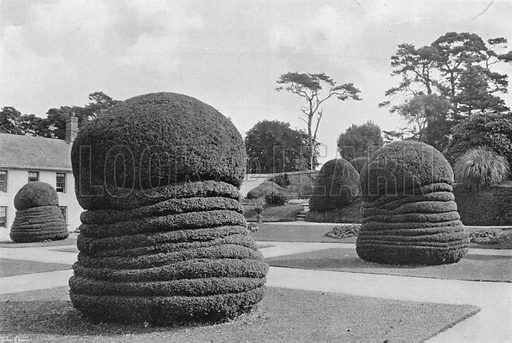 Yews Like Concertinas. Photograph in Gardens Old and New Vol III (Country Life, c 1910).