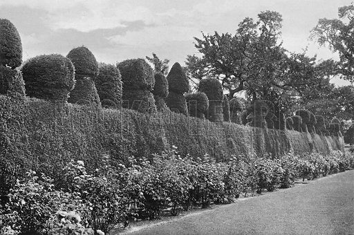 Fulford Hall: Eccentric Topiary Work. Photograph in Gardens Old and New Vol III (Country Life, c 1910).