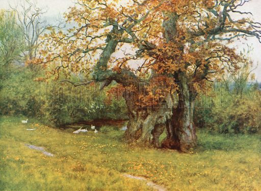 The Waller Oak, Coleshill. Illustration for Happy England by Marcus B Huish (A & C Black, 1909).