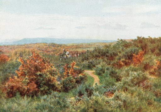 Blackdown from Witley Common. Illustration for Happy England by Marcus B Huish (A & C Black, 1909).