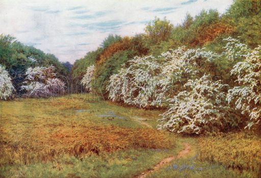 The Hawthorn Valley, Brocket. Illustration for Happy England by Marcus B Huish (A & C Black, 1909).