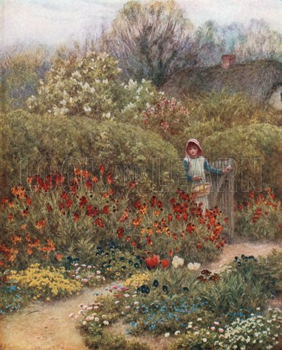 Wallflowers. Illustration for Happy England by Marcus B Huish (A & C Black, 1909).