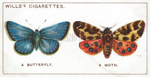 A Butterfly. A Moth. Illustration from Wills's Do You Know cigarette card series, early 20th century.