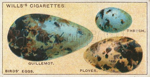 Birds' Eggs. Illustration from Wills's Do You Know cigarette card series, early 20th century.
