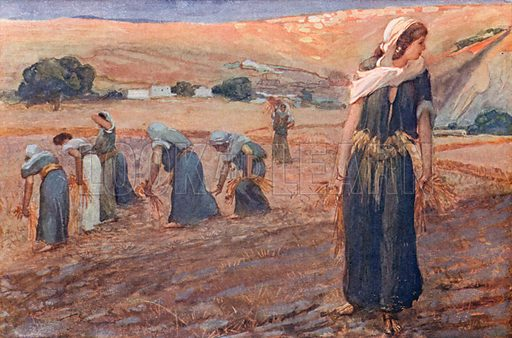 Ruth Gleaning. Illustration for The Old Testament - Part II (Brunoff, 1904).