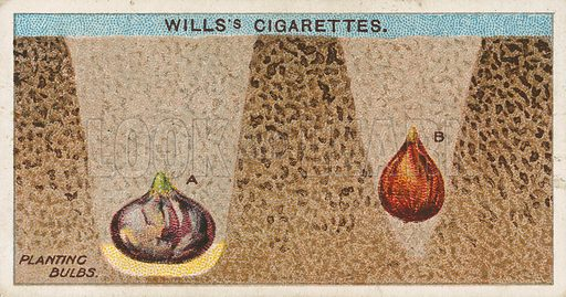 Planting Bulbs. Illustration for early 20th century cigarette card.