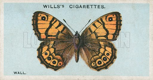 Wall. Illustration for early 20th century cigarette card.
