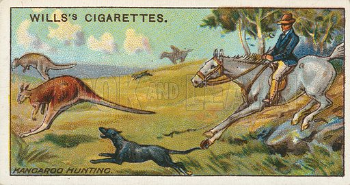 Kangaroo Hunting. Illustration for early 20th century cigarette card.
