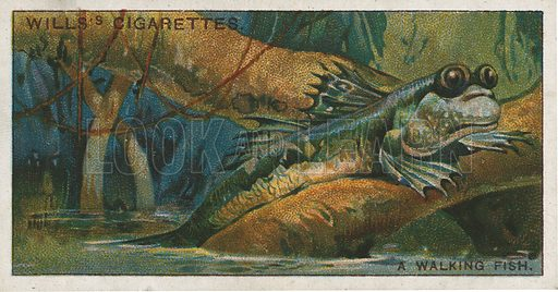 A Walking Fish. Illustration for early 20th century cigarette card.