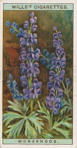 Monkshood. Illustration for early 20th century cigarette card.