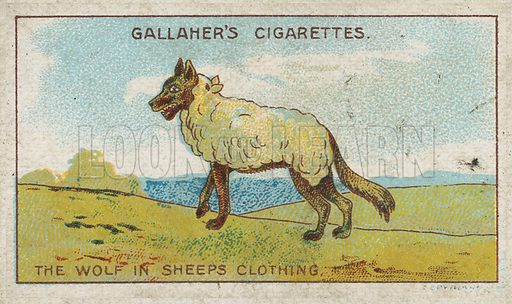 The Wolf in Sheeps Clothing. Illustration for early 20th century cigarette card.