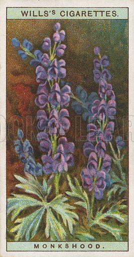 Monkshood. Illustration for early 20th century cigarette card.