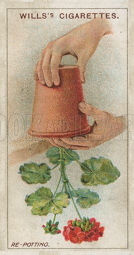Re-Potting. Illustration for early 20th century cigarette card.