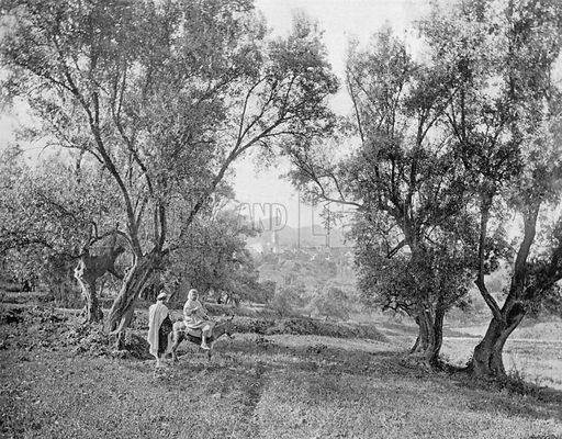 Tlemcen - Sidi-Bou-Medine. Photograph for Le Panorama Merveilles de France (De Neurdein, c 1895).