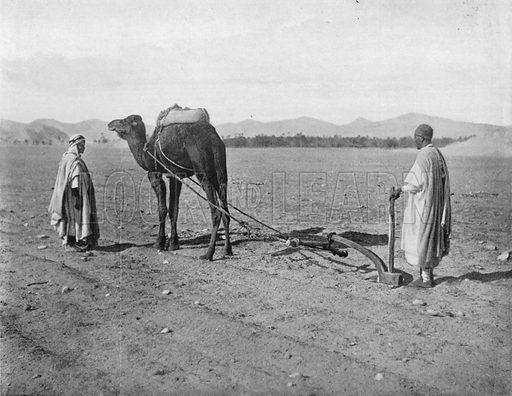 Algerie - Charrue. Photograph for Le Panorama Merveilles de France (De Neurdein, c 1895).