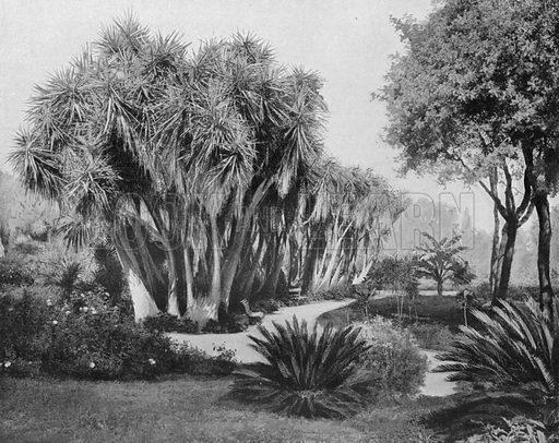 Alger – Le Hamma (Jardin D'Essai). Photograph for Le Panorama Merveilles de France (De Neurdein, c 1895).