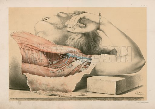 The Upper Limb. The Superficial Muscles of the Thorax, and the Axilla with its Contents. Illustration for Illustrations of Dissections by George Viner Ellis and G H Ford (c 1870).