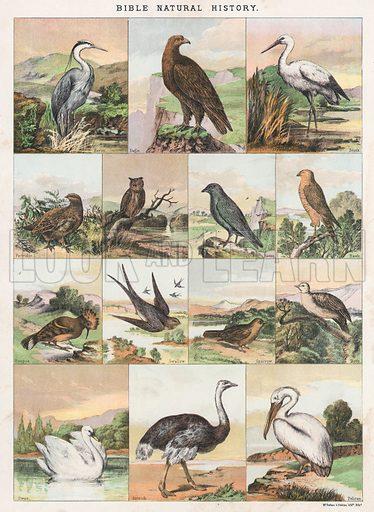Bible Natural History. Illustration for The National Comprehensive Bible (WRM'Phun & Son, 1876).