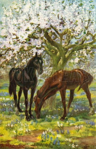 In the Orchard. Illustration for Black Beauty by Anna Sewell (Blackie, c 1910).